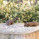 Chipmunks Eating off a tree stump