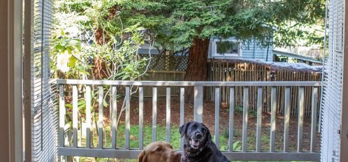 dogs hanging out on the property